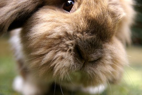 A word from the yoga bunny & a guided meditation for autumn…